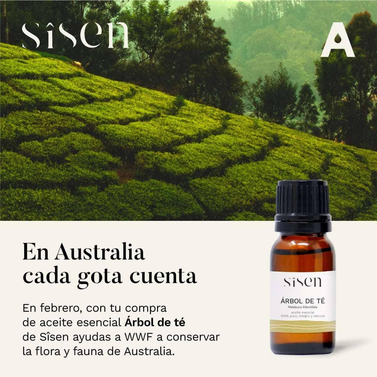 arbol de te y reforestacion en australia
